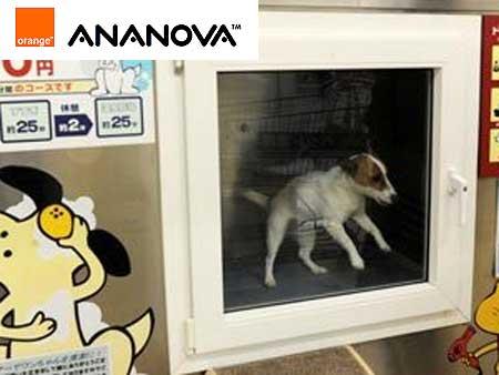 Japoneses criativos inventam máquina de lavar cães
