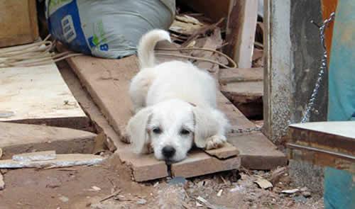 Prefeitura de Caçapava descumpre lei e não recolhe animais abandonados