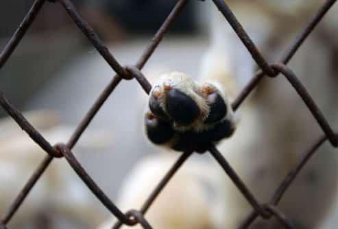 Piracicaba – Canis Lotados… Tem solução? Protetor, por favor, leia