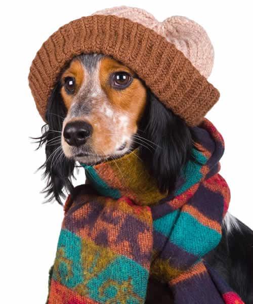 No inverno os donos precisam proteger seus animais do frio