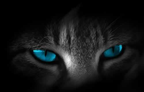 olho-de-gato
