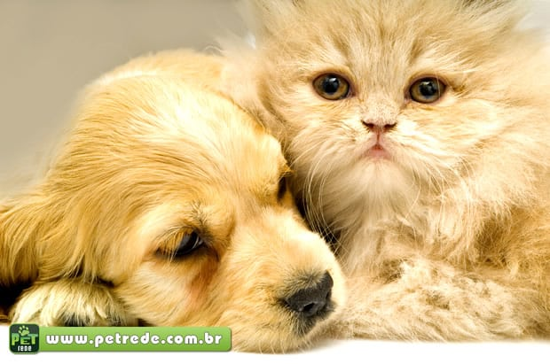 Gatos que convivem com cães quase sempre dão as cartas