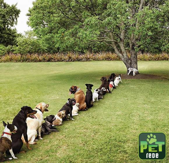 Denúncia! As consequências do desmatamento que ninguém divulga