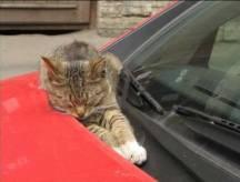 pet-rede-gato-dormindo-00