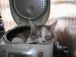 pet-rede-gato-dormindo-12