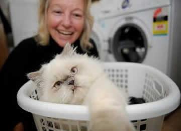 pet-rede-gato-na-maquina-de-lavar-roupa