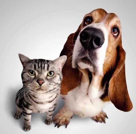 Pets: Saiba o que fazer em casos de intoxicação