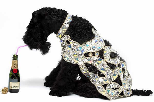 Cachorros levam vida de luxo em Manhattan