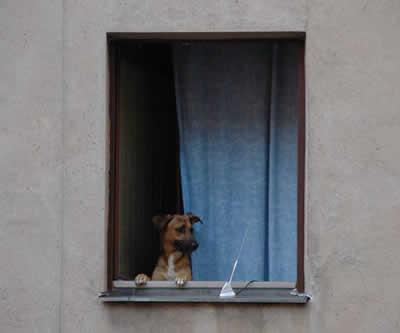 petrede-cachorro-apartamento