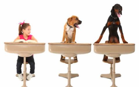 petrede-cachorro-carteira-escola-aprender