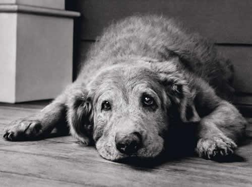 """Saiba como ajudar seu cão a passar pela """"terceira idade canina"""""""