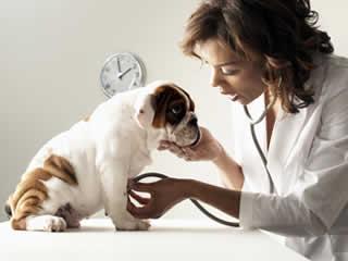 petrede-consulta-veterinaria