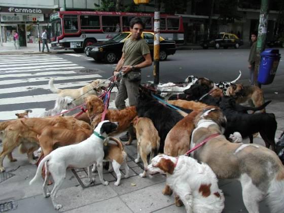 Rede de franquias lança serviços para cuidados com pets