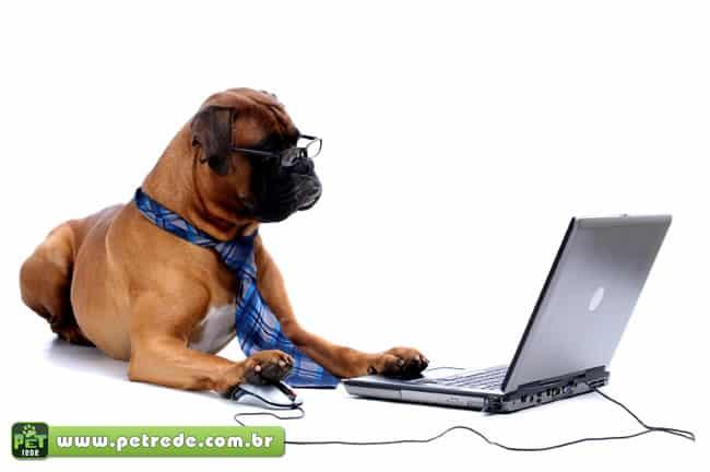 Pesquisa afirma que cães sabem contar e enganar os homens
