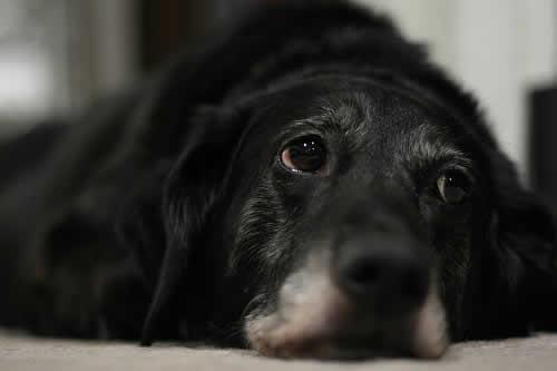 5 maneiras de diminuir o estresse do cão durante o divórcio