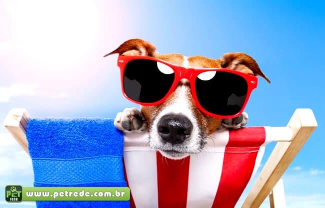 Óculos escuros para cachorros: exagero ou necessidade?