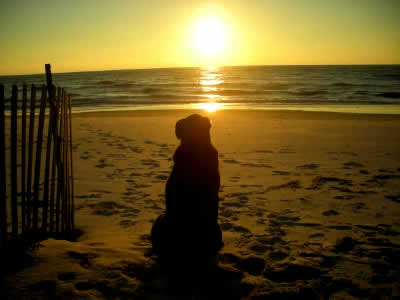petrede-cachorro-praia-por-do-sol
