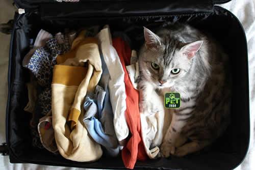 petrede-gato-dentro-da-mala-de-viagem