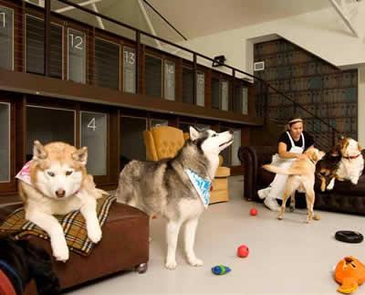 petrede-hotel-para-cachorro