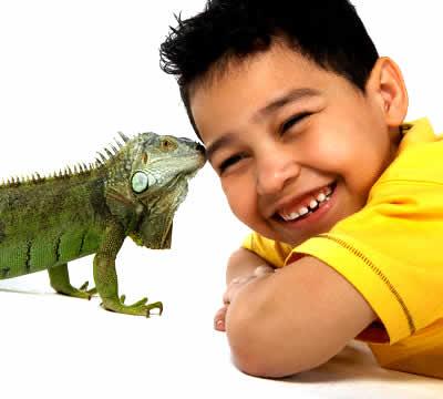 Iguana: saiba mais sobre este réptil