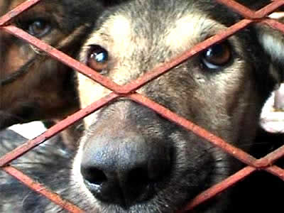 petrede-cachorro-preso-grade-crueldade-triste