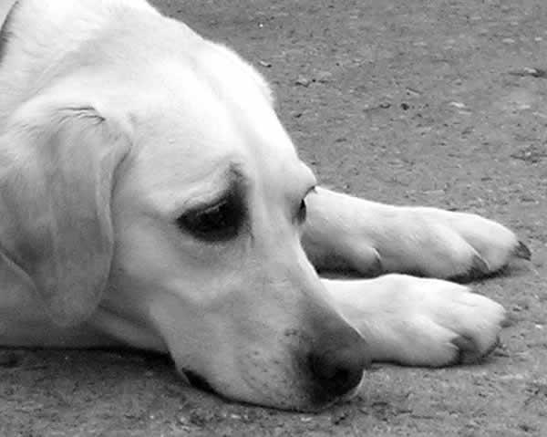 petrede cachorro triste Distúrbios: Terapia pode ser indicada para cães