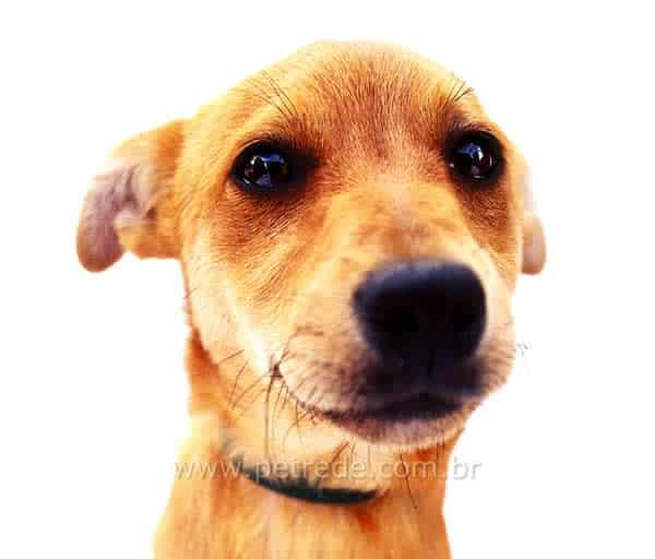 cachorro-olhar-triste-chorando-petrede