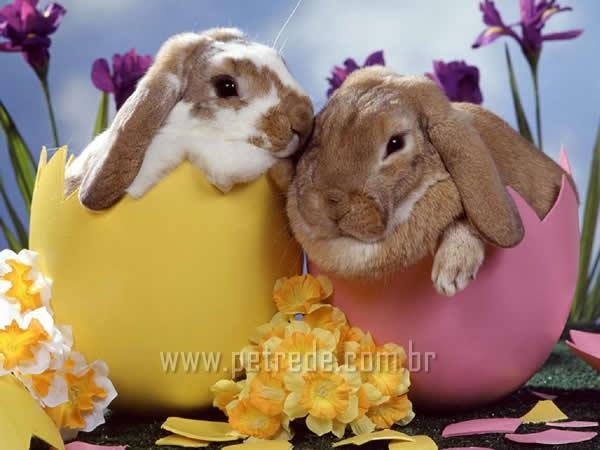 Como o coelho foi parar na Páscoa?