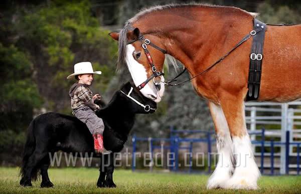 Menor cavalo do mundo vira estrela de feira de brinquedos nos EUA