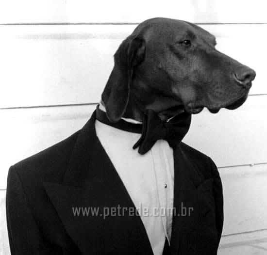 cachorro-de-terno-roupa-petrede