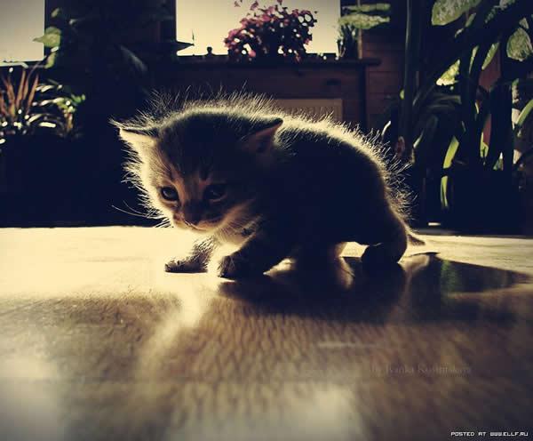 gatinho-filhote-muito-fofo-petrede