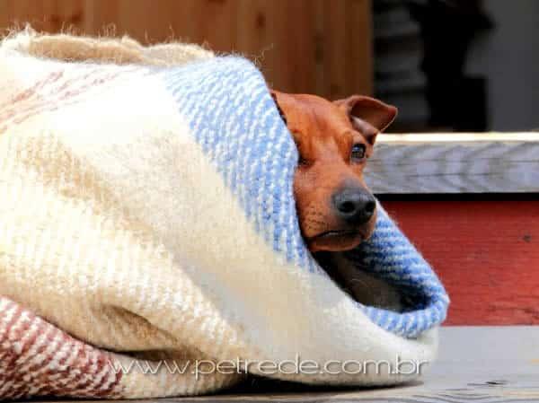 Veterinária dá dicas sobre cuidados essenciais com os pets durante o inverno