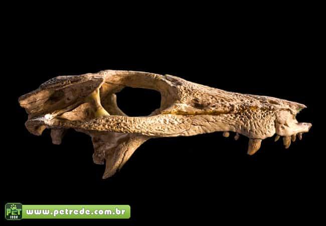 cachorro-cranio-osso-arqueologia-escavacao-petrede
