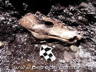 cranio-escavacao-arqueologia-cachorro-petrede
