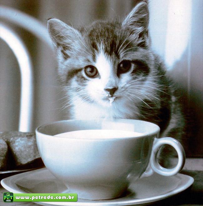 gato-filhote-fofo-lindo-cute-bebendo-leite-comida-alimento-petrede