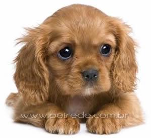 filhote-cachorro-petrede