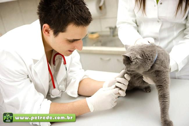 veterinario-gato-consulta-medico-exame-petrede