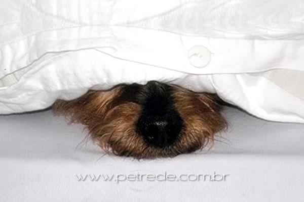 cachorro-escondido-medo-fogos-petrede