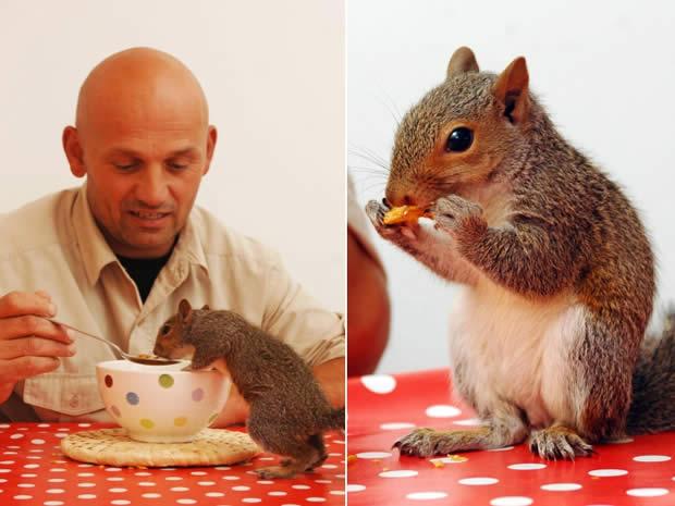 Esquilo se cura de mordida de gato comendo cereal