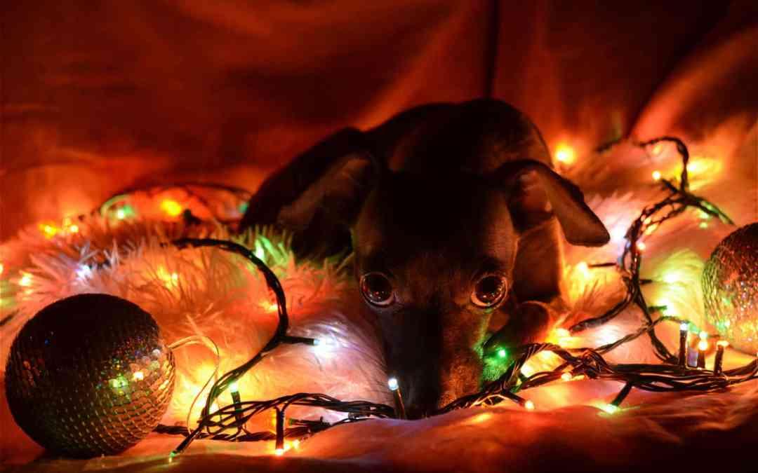 Mercado pet lança panetone e roupas natalinas para cachorro