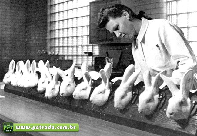 """""""A pesquisa científica com animais é uma falácia"""", diz o médico Ray Greek"""