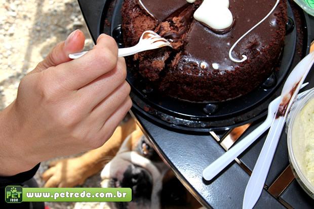 Por que é proibido dar chocolate aos cães?