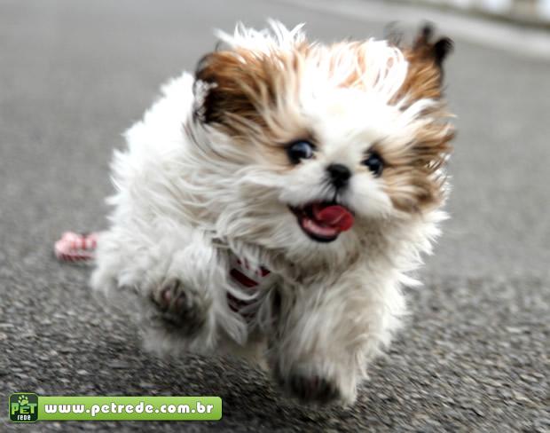 cachorro-fugindo-correndo-petrede