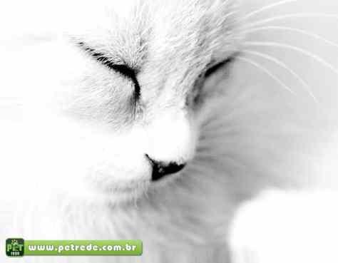 gato-dormindo-petrede