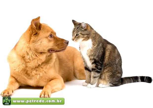 Cão e Gato: Manual de Instruções – 15 dicas que você provavelmente não sabia