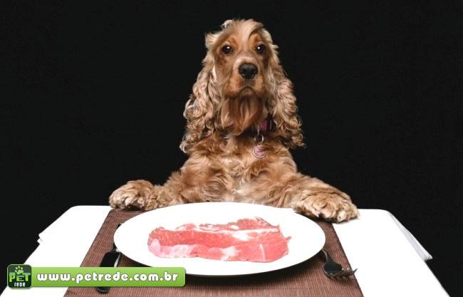 A importância da proteína na alimentação dos pets