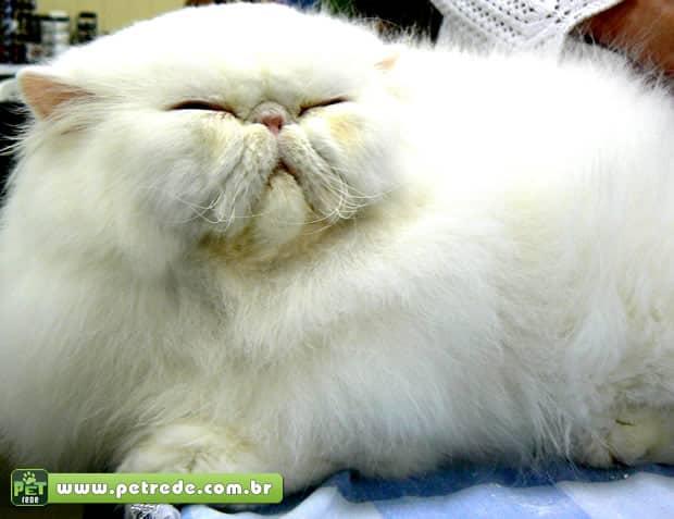 Incidência de obesidade e diabetes está aumentando entre os gatos