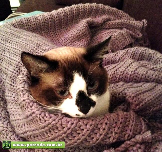 Cuidados especiais com seu gato no inverno