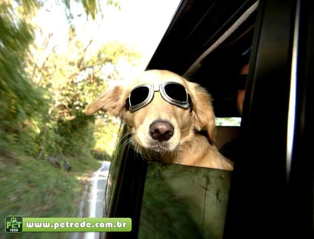 Bom pra cachorro: pets ganham óculos escuros para curtir o Verão