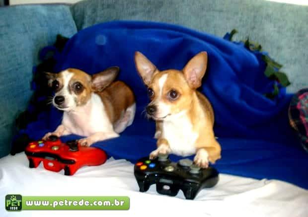 cachorro-jogando-video-game-controle-petrede